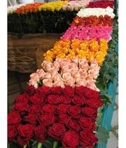Розы срезанные оптом