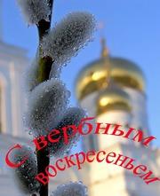 Продам вербу оптом по низким ценам в Москве и МО
