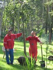 Садово-парковые растения
