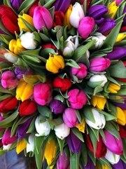 Тюльпаны оптом в Новосибирске к 8 марта