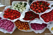 Тюльпаны из Красноярска к 8 марта 2016 года