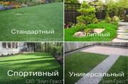 Купить готовый рулонный газон.