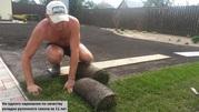 Рулонный газон отличного качества от 165 руб/рул. +7927-777-05-75