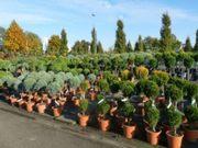 Ландшафтные растения из Европы. Доставка. Низкие цены.